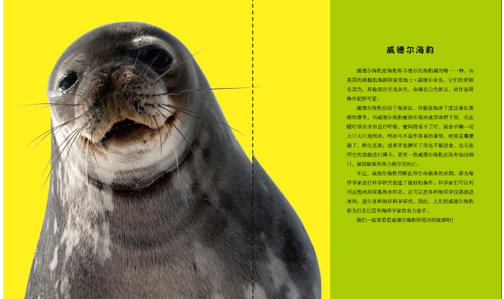 海洋动物探秘故事丛书 套装全9册 竖琴海豹和威德尔海豹 虎鲸和伪虎鲸