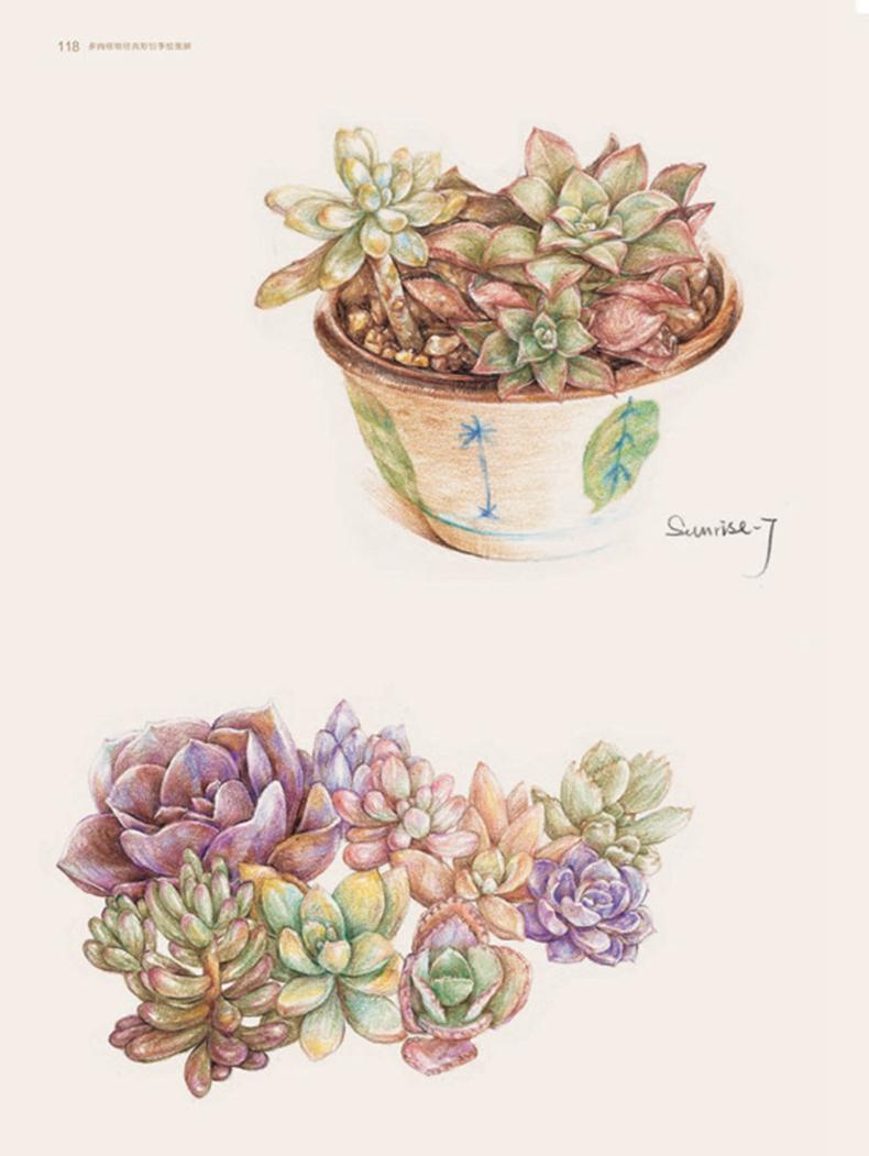 多肉植物经典彩铅手绘图解 全2册 绘多肉 水彩萌肉记 水彩色铅笔画