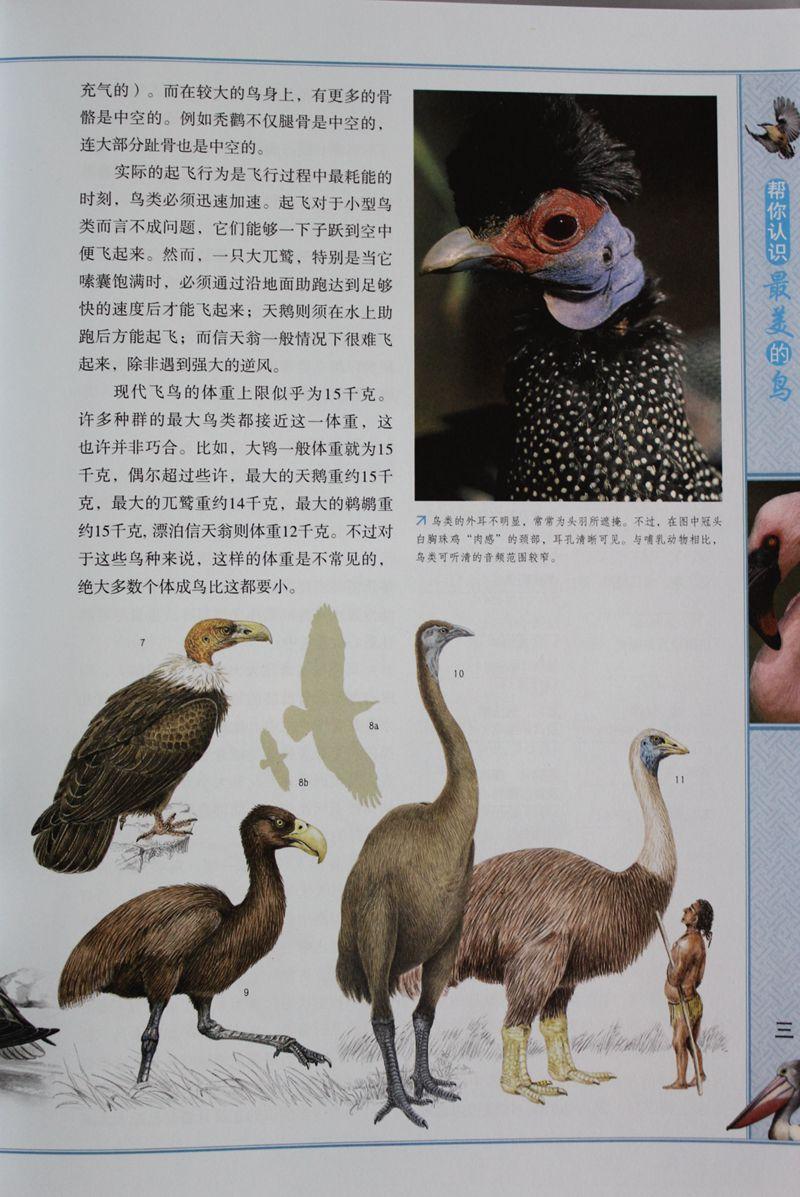 帮你认识最美的鸟 彩图精装版4册 动物百科知识 青少年儿童科普读物