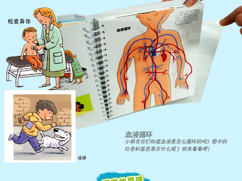 我们的身体绘本 儿童3d立体书 人体结构书籍儿童版 乐乐趣科普翻翻书