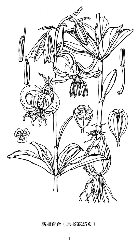 奥托手绘彩色植物图谱(独家秘密花园科普版 附赠填色本)